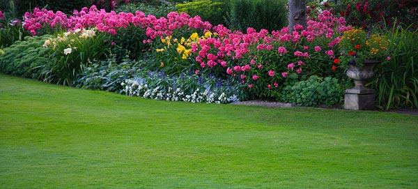 газон летом